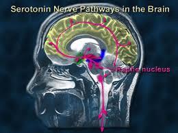 omega 3 serotonin