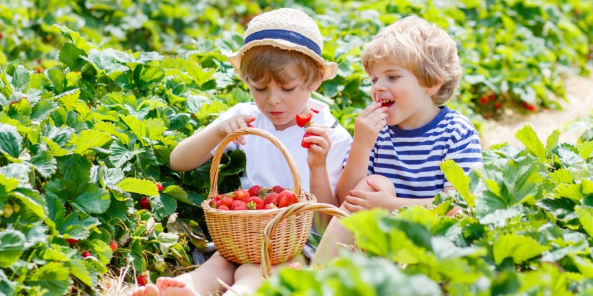 children-eating-strawberries-1200x600