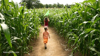Children-Running-Corn-Field-Farm