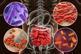test-gut-bacteria